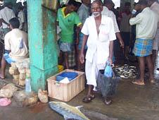 斯里蘭卡:內戰後賣魚籌款傳統再現