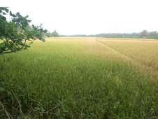 神父指責印度政府政策不當導致農民自殺