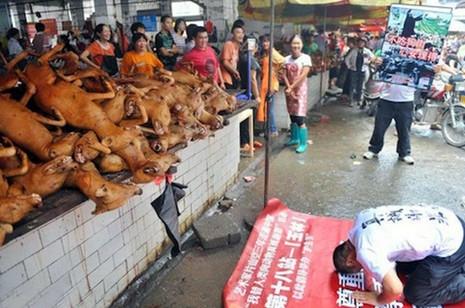 廣西玉林狗肉節受愛護動物組織批評
