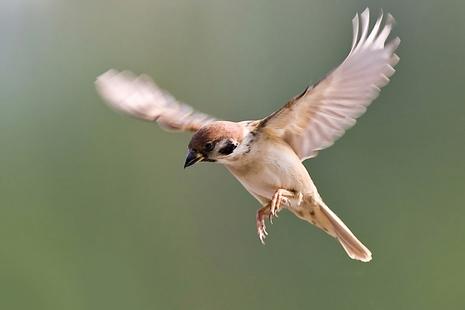 【博文】天主所賜的一對翅膀