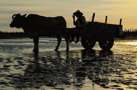 【博文】嘎吱作響──牛與車的遭遇 thumbnail