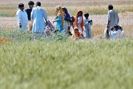 巴基斯坦以反恐法對付爭取權益的示威農民