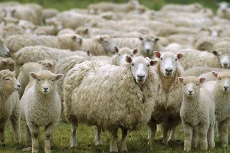 【博文】尋羊