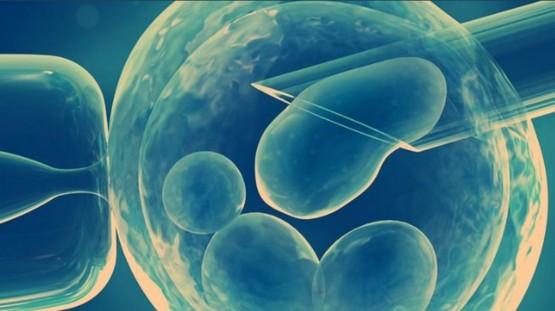 澳門婚委會就《醫學輔助生殖技術》立法諮詢提出反對意見