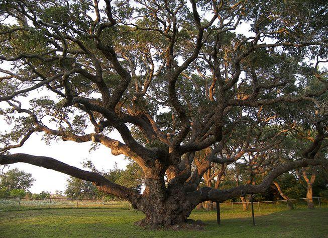 【博文】三根樹枝的啟發