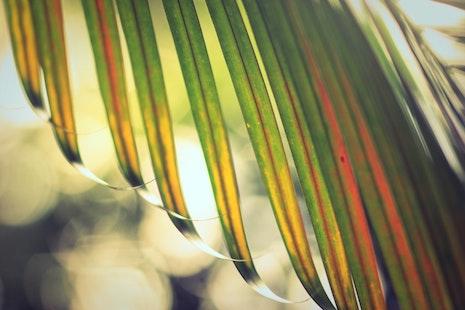 達喀爾總主教告訴教友,用圍巾代替棕櫚枝