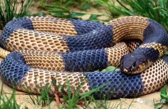 【博文】毒蛇朝聖