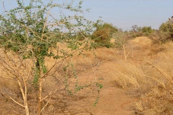 西非塞內加爾天主教團體在聖枝主日選擇以圍巾代替棕櫚枝
